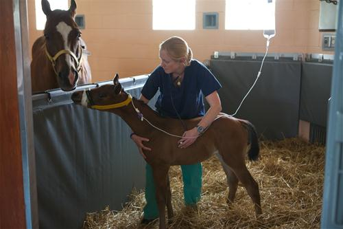 Cutest Gig Ever Volunteer Foal Sitters Needed For 2016
