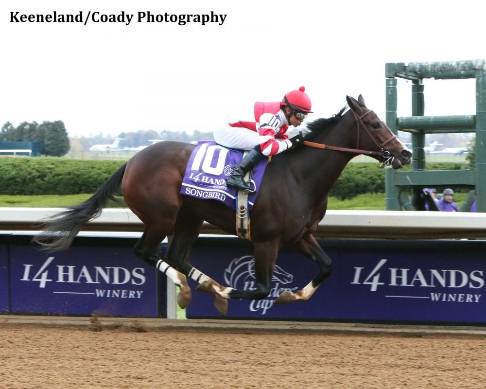 Songbird Professional In Half Mile Workout Horse