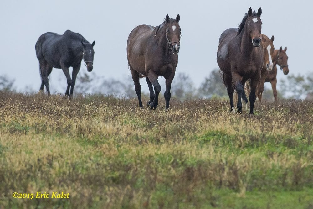 Ask Your Insurer: Does It Cost More To Insure A Broodmare Prospect Over A Veteran Mare?