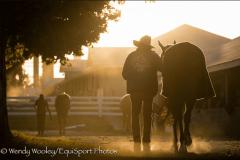 Keeneland morning scene barn groom hotwalker
