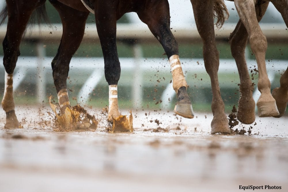 Confident In The Performance Of Our Track Keeneland