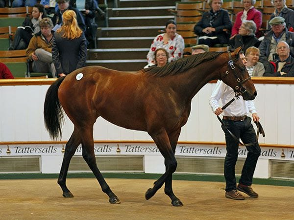 Galileo Rules Opening Day Of Tattersalls October Yearling