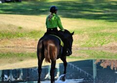 The Green Knight on the trails at Kentucky Horse Park