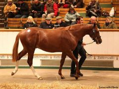 Lot 175, colt by New Approach x Night Frolic, topped the Tatts December Yearling sale