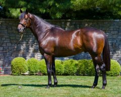 It's been less than a year since the passing of the Ashford stallion Scat Daddy