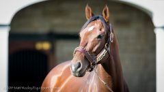 Wicked Strong at Spendthrift Farm