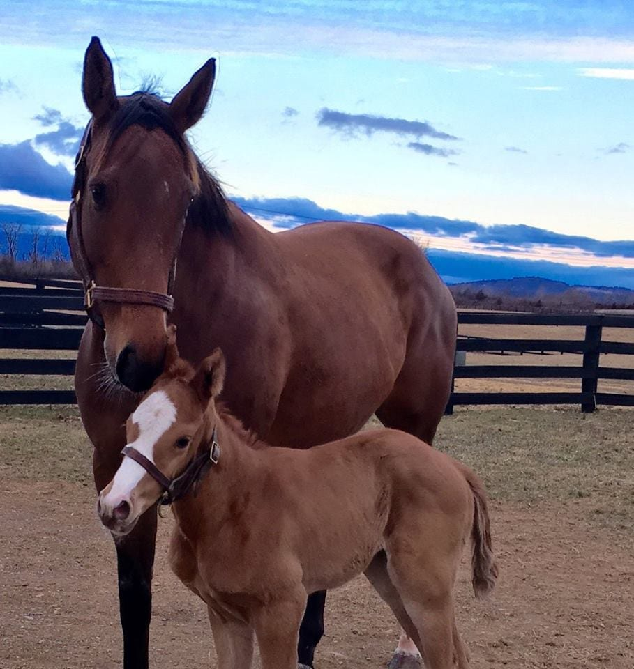 Mucho Macho Man S First Foal Is A Filly Horse Racing