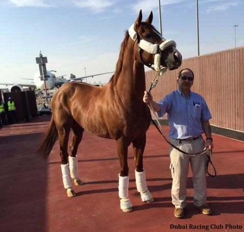 Have Chrome Will Travel Horse Of The Year Arrives Safely