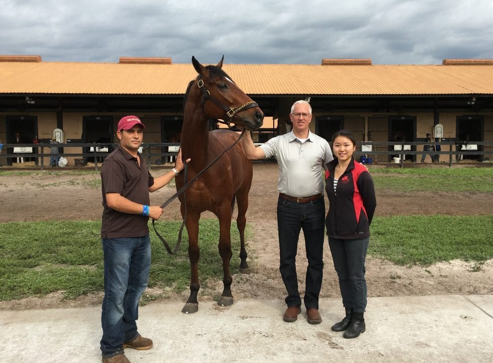 mongolian prince has owners excited over colt u2019s north american racing career