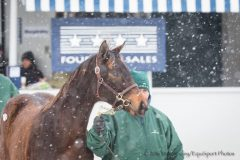 Scene at the Keeneland January Sales snow
