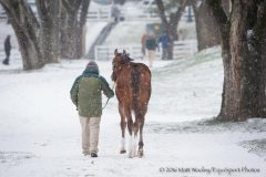 Scene at the Keeneland January sale