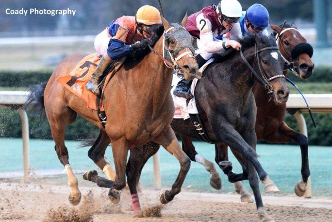 Call Pat Circles Field For Bayakoa Victory Horse Racing