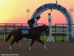 """I've never seen him in this perfect condition he's in right now,"" said Sherman (Dubai Racing Club Photo)"