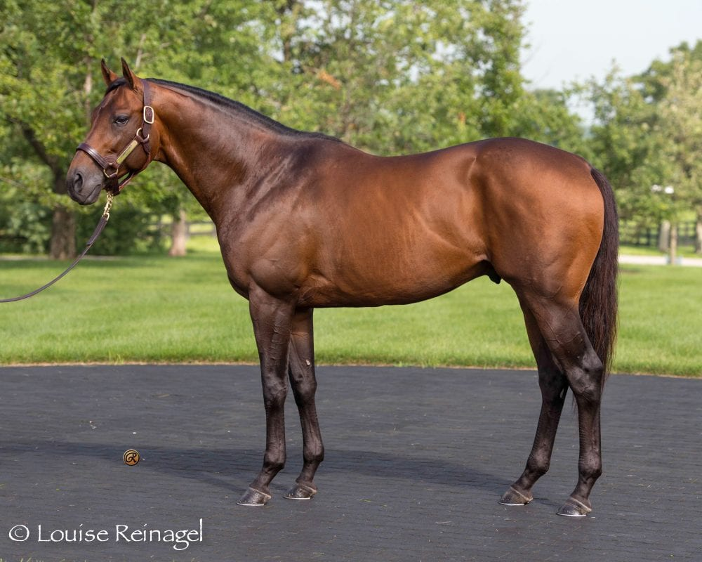 Commissioner entered stud at WinStar Farm in 2016