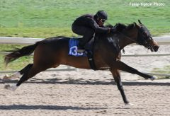 This colt from the first crop of Bodemeister (hip 133) shared the co-fastest breeze time of :10 flat with nine other 2-year-olds at the Fasig-Tipton Florida Sale.