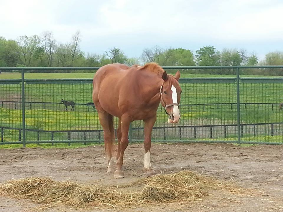 how to work a horse in a round pen