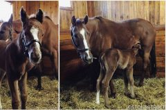 Dayatthespa with newborn filly (photo via Stonestreet Facebook page)