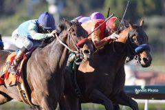 Hoppertunity (right) gets his nose down first in the San Antonio