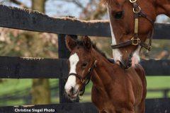 A. K. A. Xe nuzzles her colt by Paynter