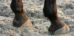 Polytrack, a synthetic racing surface formerly manufactured by Martin Collins Surfaces & Footings
