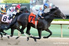 Upstart tallies another graded stakes victory for his sire Flatter in the Razorback Handicap