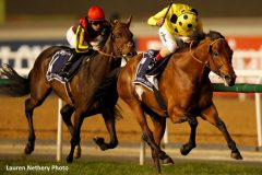 Postponed winning the 2016 Dubai Sheema Classic.