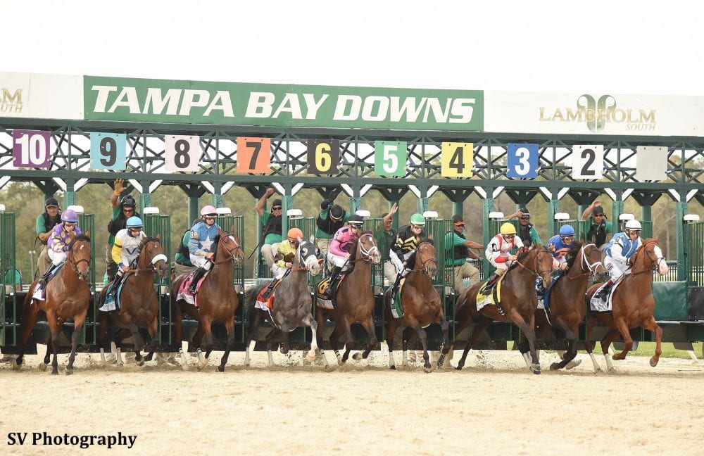 tampa bay downs starting gate