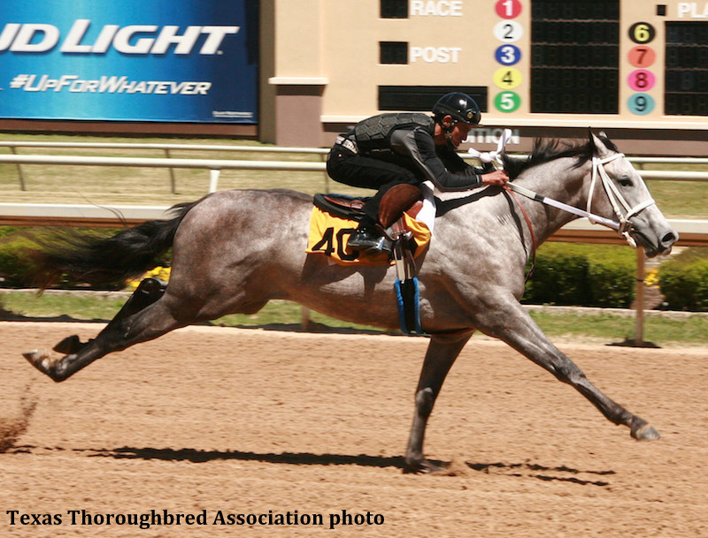 Too Much Bling Filly Fastest In Texas Juvenile Sale