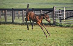 "This filly by Hat Trick embodies the notion of ""kicking up your heels"""