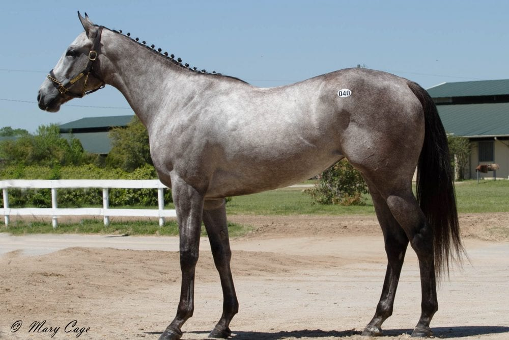 Texas 2 Year Old In Training Sale Average Top Prices