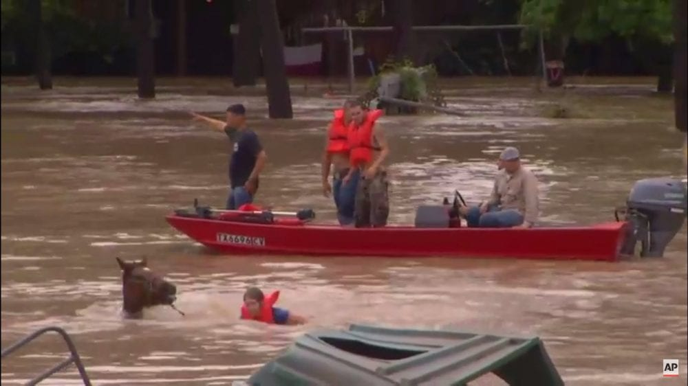 Volunteers Help Rescue Horses From Texas Flooding Horse