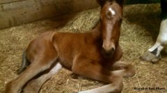 This filly is the daughter of Nut N Better, a member of the Iowa Racing Hall of Fame
