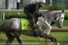 Creator (Tapit) trains for the Kentucky Derby (Gr I) at Churchill Downs 5/5/16.