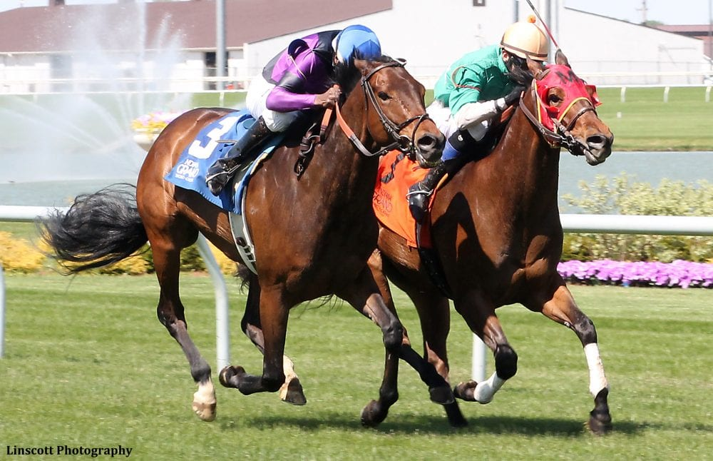 Get your horse racing picks and bet like a champion