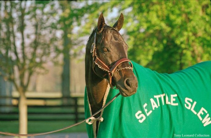 Seattle Slew after a bath at Spendthrift Farm in 1981