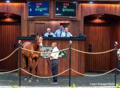Hip 926, colt by City Zip x Successful Sarah, topped the OBS June sale at $800,000
