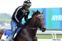 Exaggerator gallops at Belmont Park