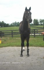 Z Camelot's half brother at Chesapeake Farm