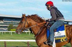 Governor Malibu training prior to the 2016 Belmont Stakes