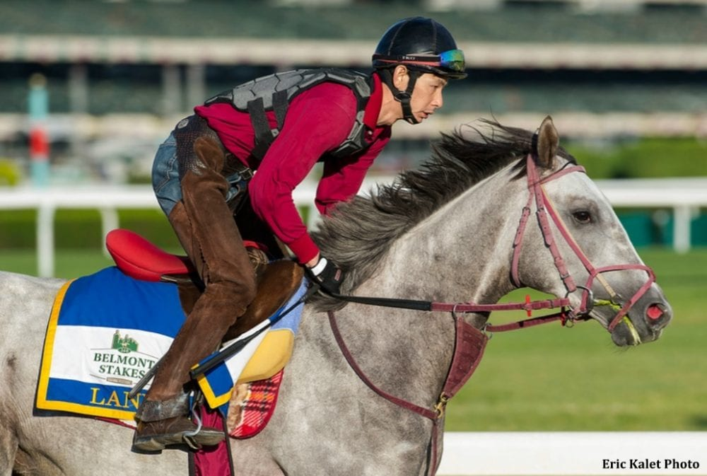 Lani galloping at Belmont