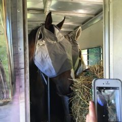 With donated fly masks, Z Camelot and Silver Cliff depart for TRF