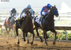 California Chrome and Dortmund battle to the wire in the San Diego Handicap