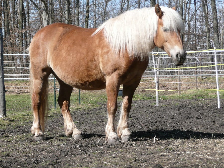 Estimating Actual Bodyweight Of Adult Horses Can Be