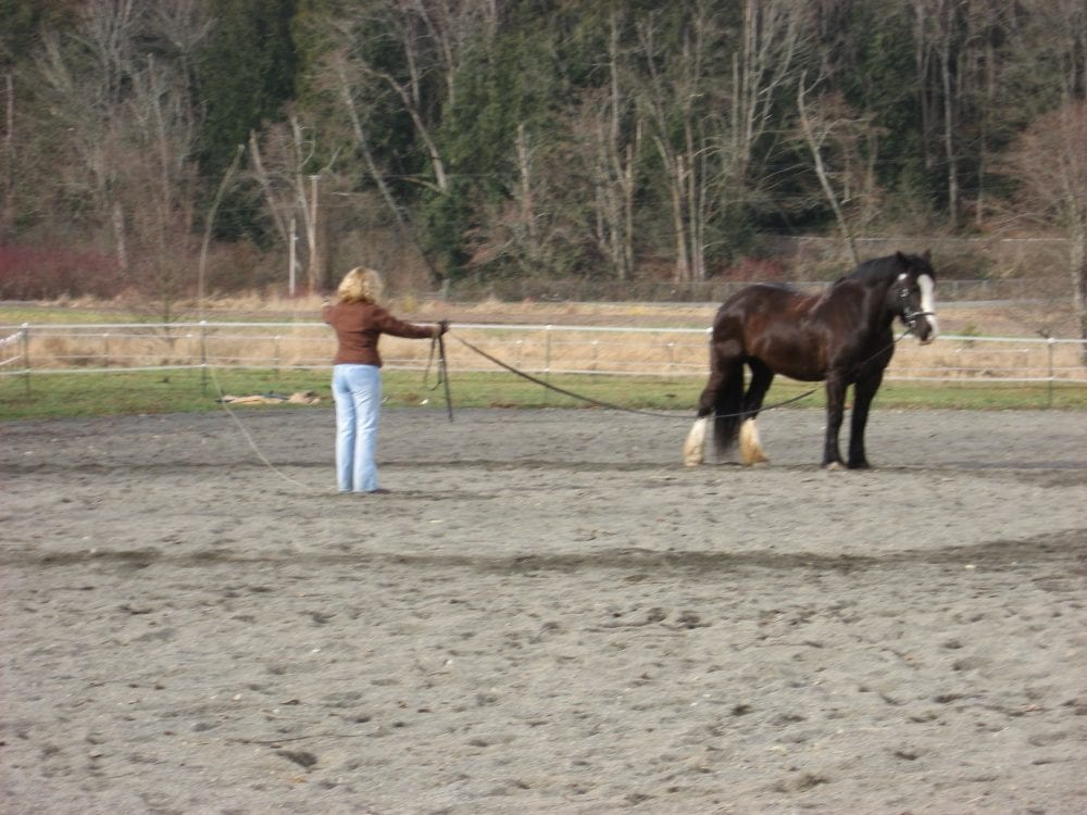 A Cut Above Castration Not As Routine As Believed Horse
