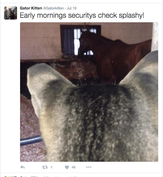 Gator tweet