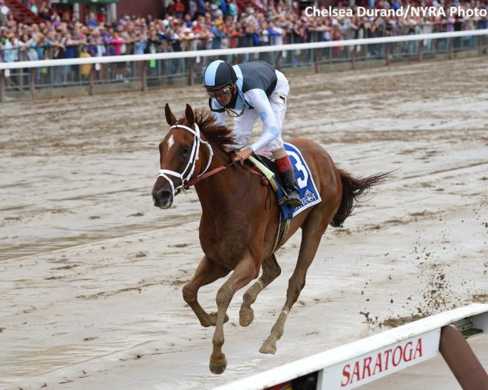 Curalina Dominates Shuvee In The Slop Horse Racing News