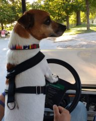 George takes an opportunity to drive the Morley golf cart