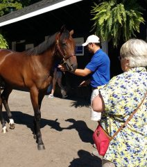 Cary Frommer inspects a horse at the Fasig-Tipton Saratoga Selected Yearling Sale