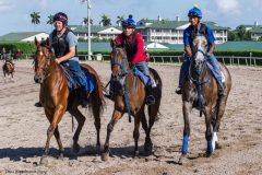 A string of horses at Gulfstream Park, seen in Marcus Vitali's tack, were listed as being trained by Allan Hunter