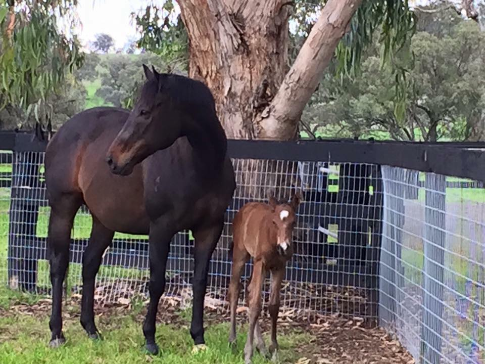 Well Done Big Girl Black Caviar Delivers Third Foal